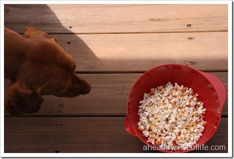 popcorn vizsla