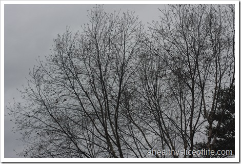 cloudy LKN