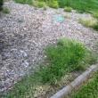 front-bed-weeds.jpg