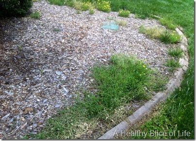 front bed weeds