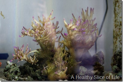 Discovery Place Mixology- growing own coral