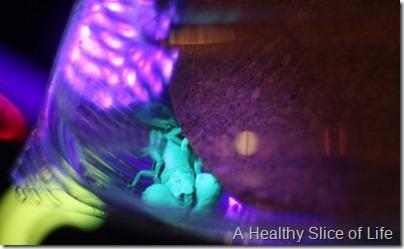 Mixology Discovery Place- glowing scorpion