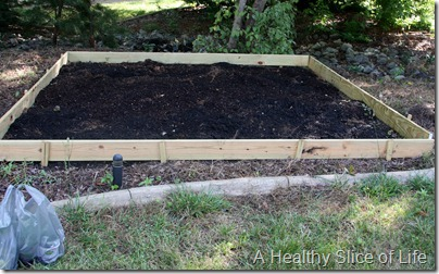backyard garden- before