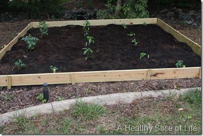 backyard garden- planted