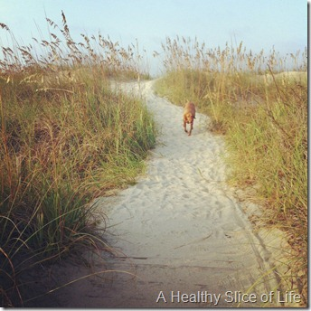 Bald Head Island- Koda
