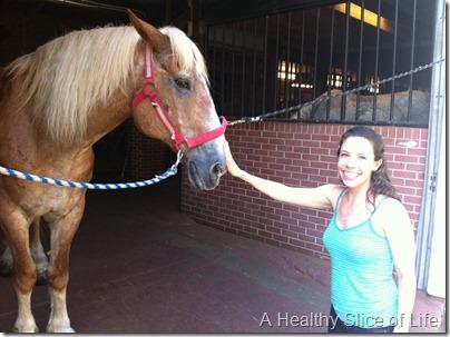 charleston- horse