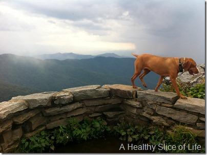 Asheville NC-hiking vizsla