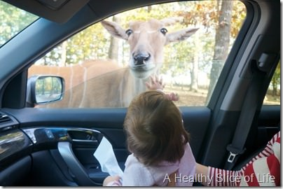 Lazy 5 Ranch- Mooresville- drive through