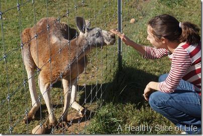 Lazy 5 Ranch- Mooresville- kangaroo