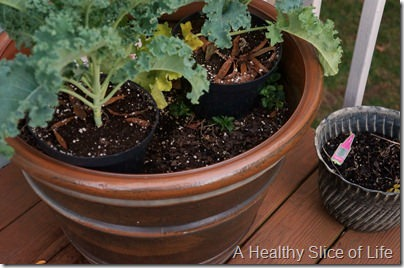 garden- kale in planters