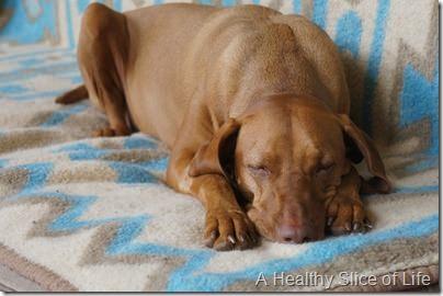 weekend- sick pup