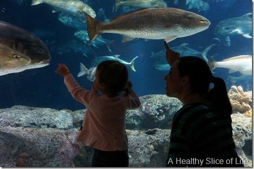Charleston- aquarium fish