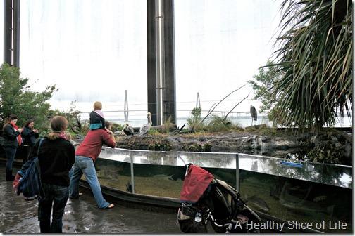 Charleston- aquarium- outside