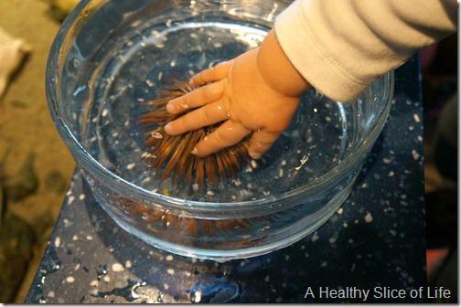 Charleston- aquarium- touch tank