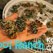 cool-ranch-kale-chips.jpg