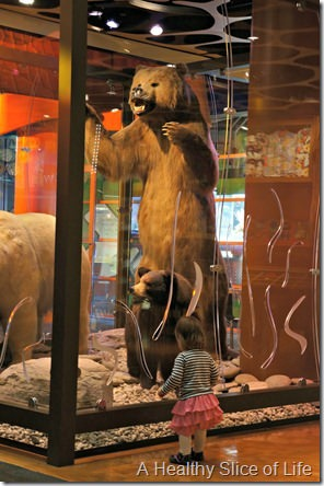 discovery place charlotte- bears