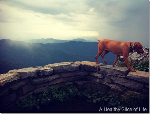 go together- vizsla and hiking