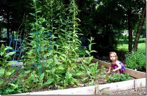 weekend- overgrown garden