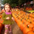 joshs-pumpkin-patch.jpg