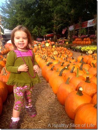 josh's pumpkin patch