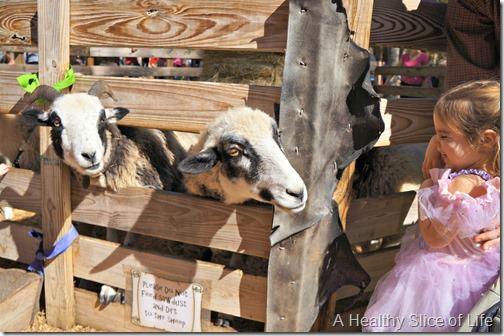 renaissance festival animals