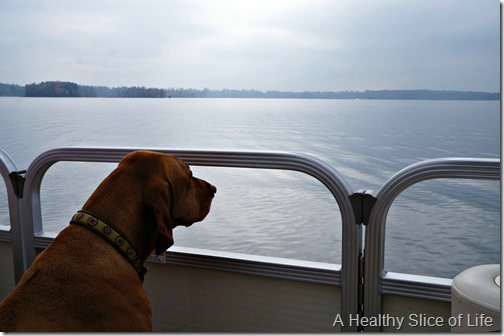 vizsla lake norman