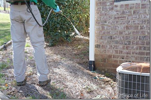 noosa pest management- natural botanical service- 5