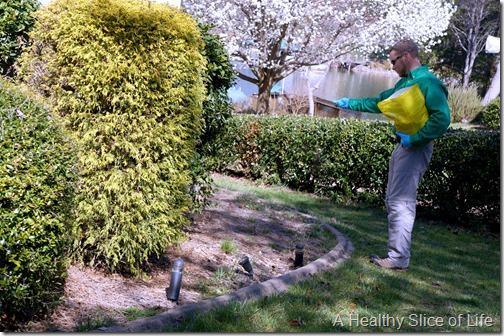 noosa pest management- natural botanical service- 7