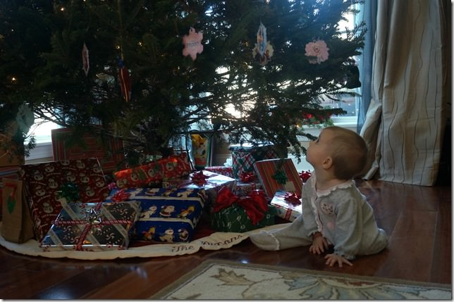 7-months-old-christmas-tree