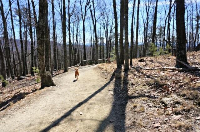 stone mountain state park north carolina- trails (1024x680)