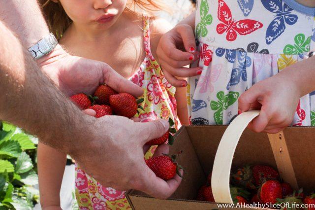 dad picking strawberries