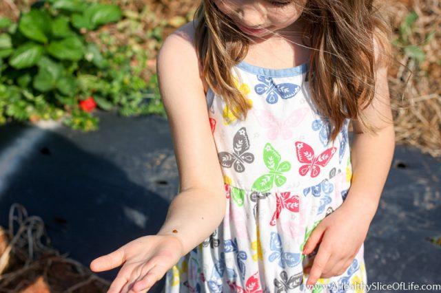 ladybug on preschooler